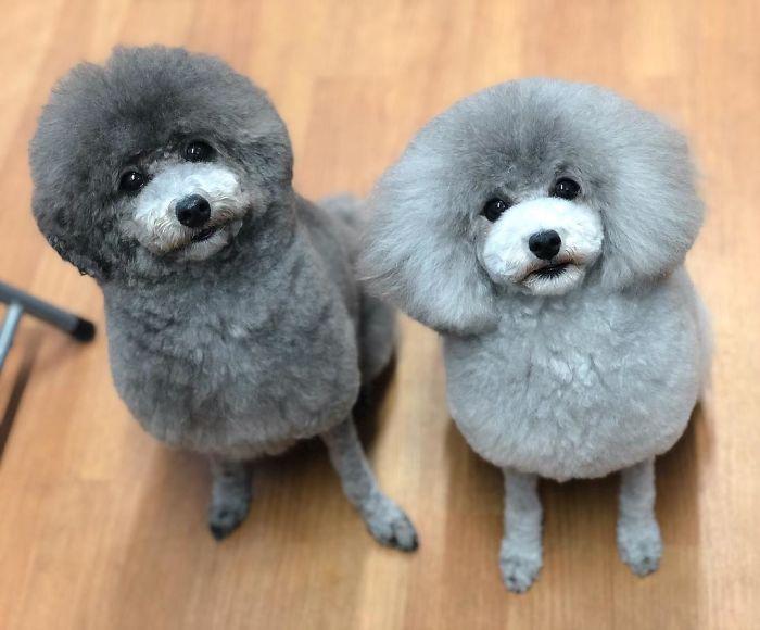 These Dogs Look Extremely Cute