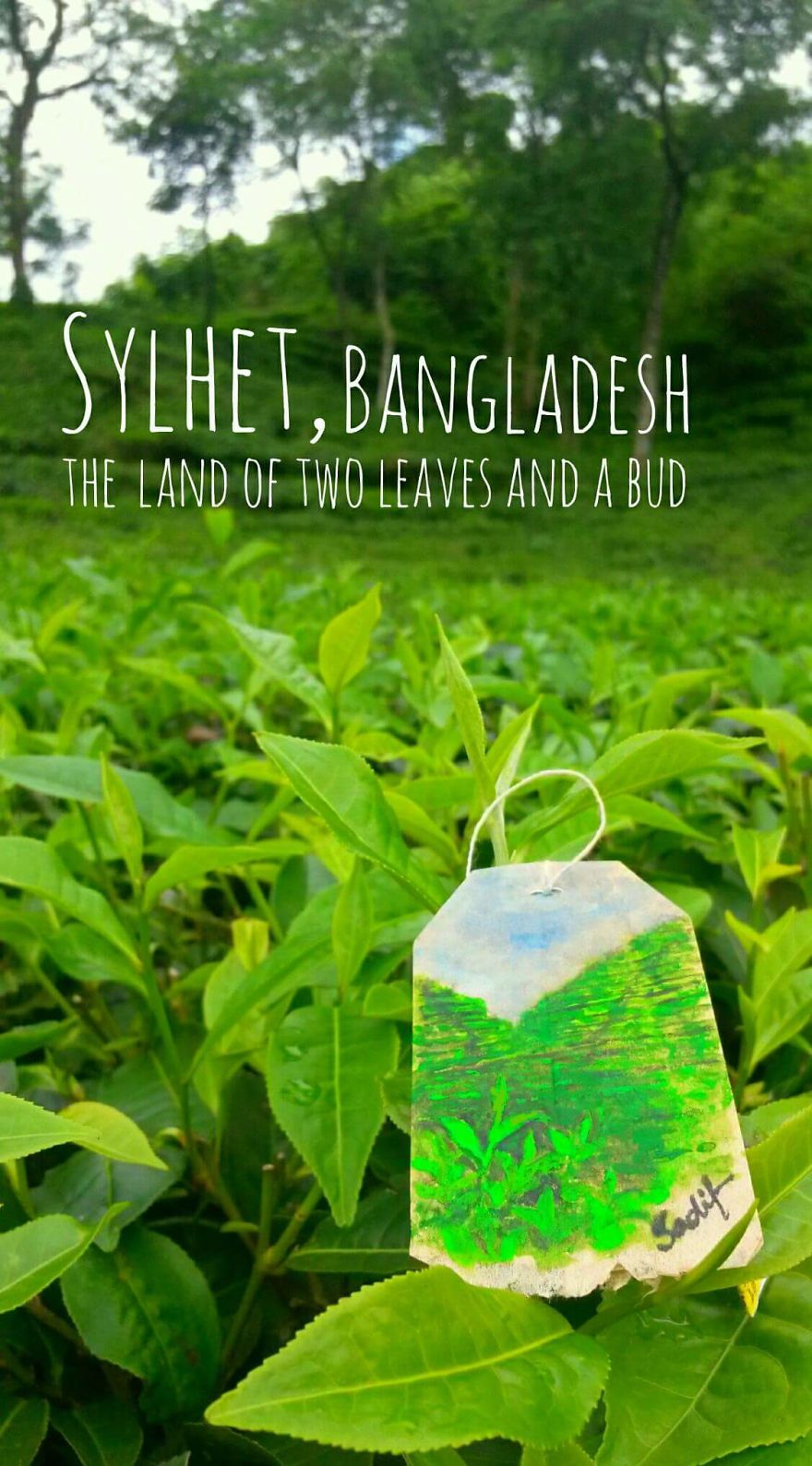 Sylhet, The Land Of Tea