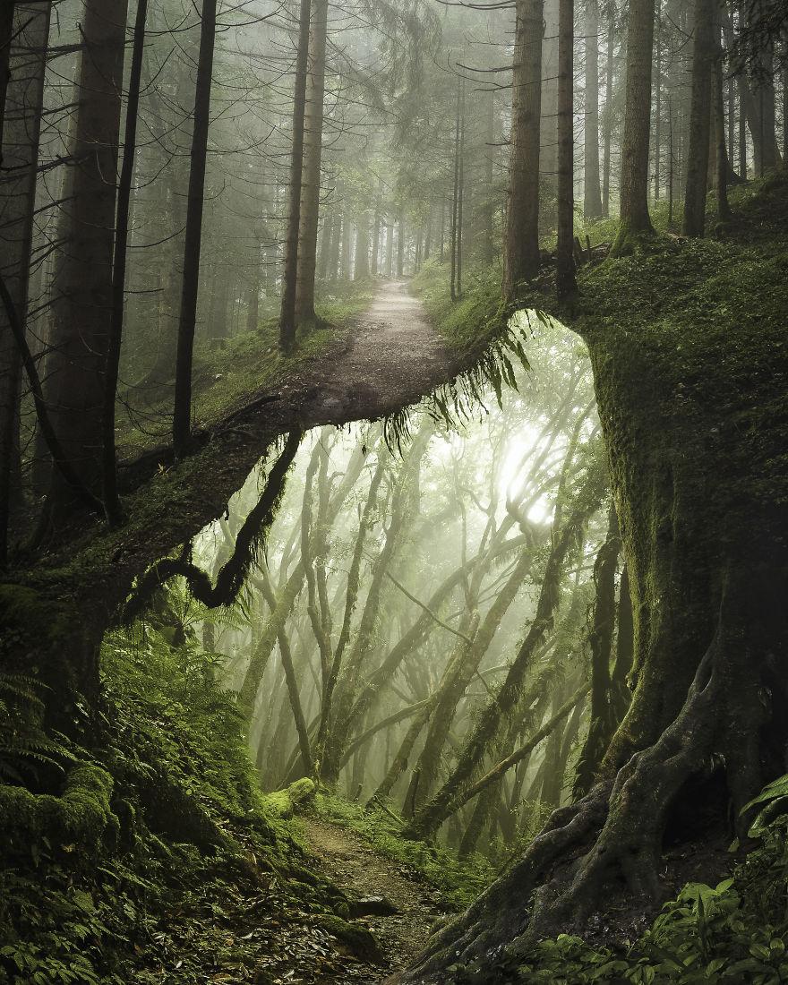 Underforest