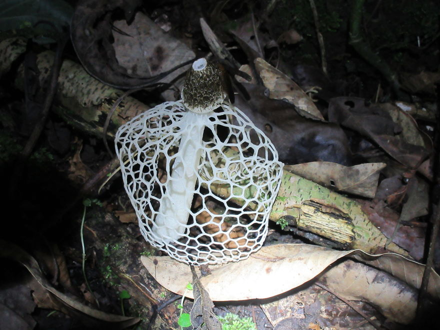 A Mushroom That Looks Like A Net!