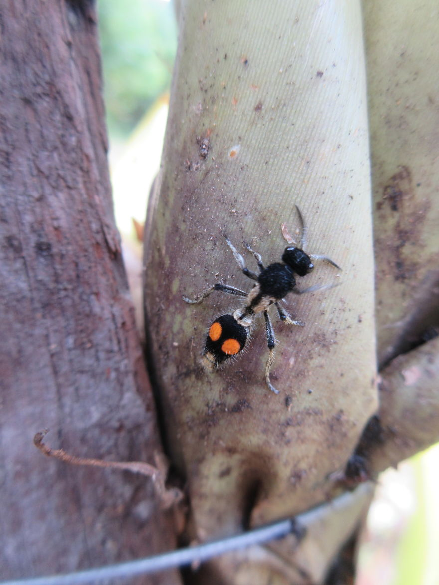 A Flightless Wasp! I Didn't Know That Was A Thing Before!
