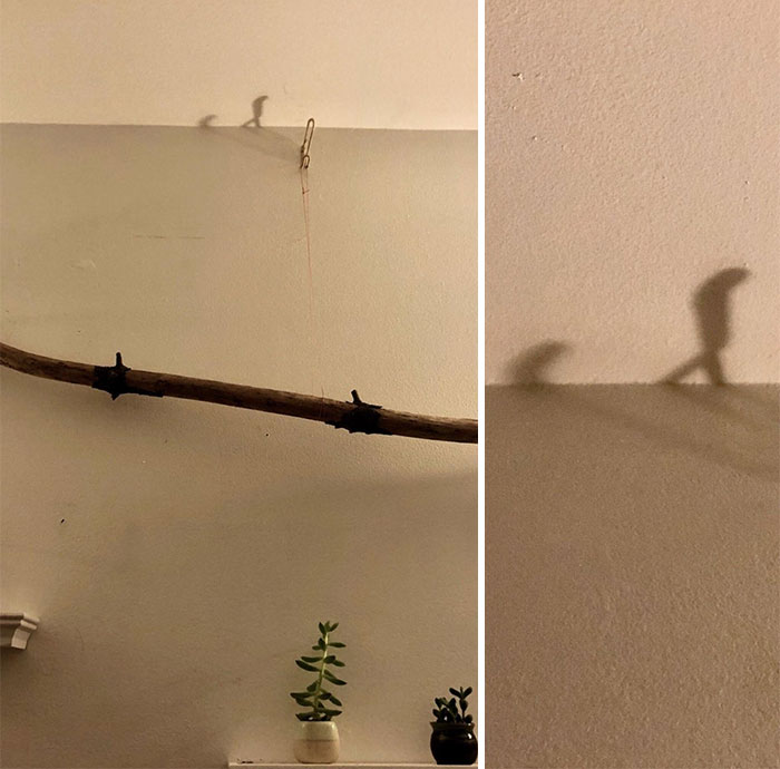 Am I High Or Is This Shadow Evolving