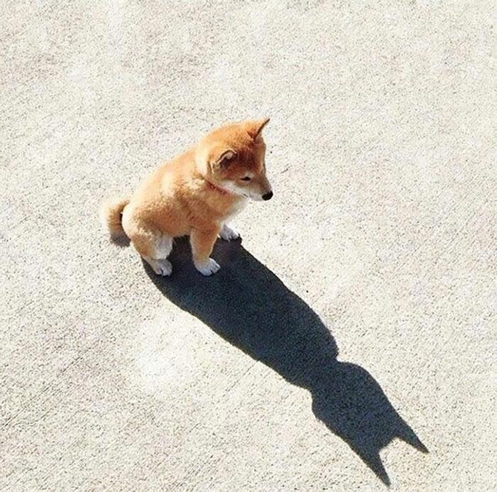 Batman In Disguise