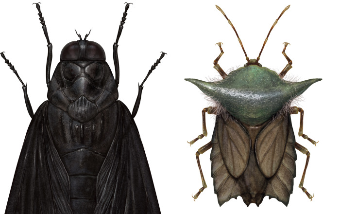 Artist Mutates Insects To Resemble Star Wars Characters – How Many Do You Recognize?