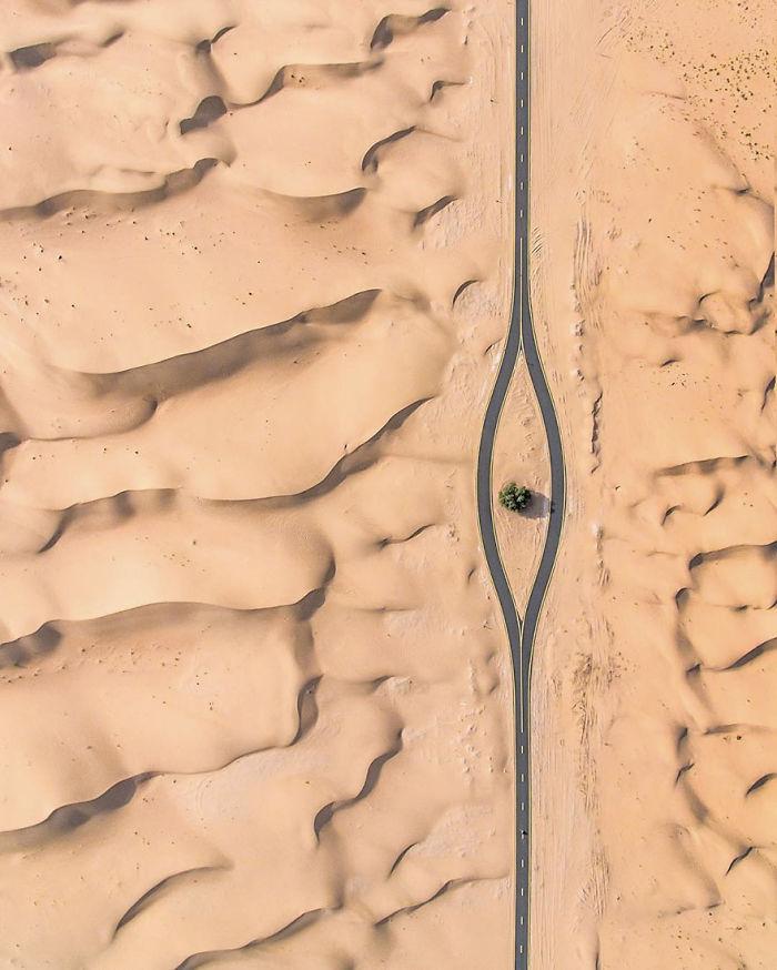 Another Tree Saved (Dubai, United Arab Emirates)