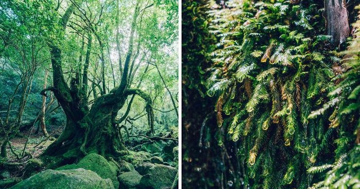 I Photographed The Ancient Princess Mononoke Forest Bored Panda