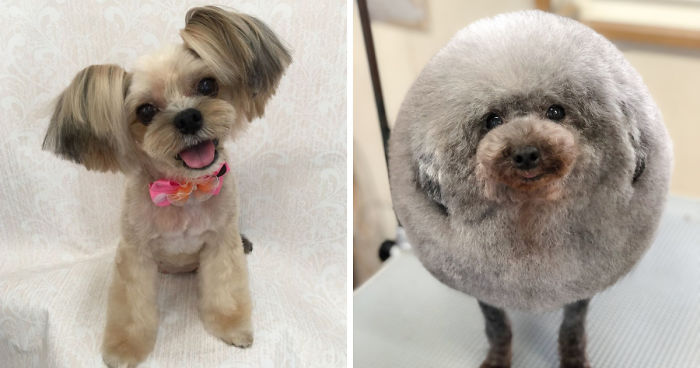 62 Dogs That Had The Makeovers Of Their Lives Done By Japanese Dog