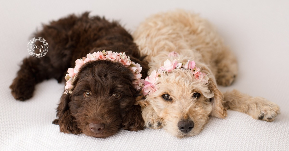 Puppy 'Newborn' Pictures: I Dressed Up My Dogs