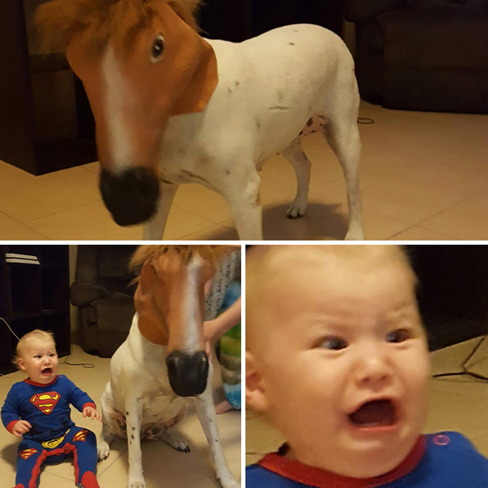 My Cousin Placed A Horse Mask On His Dog, His Son Didn't See The Humor In It