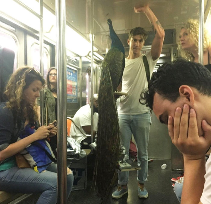 104 Times People Had To Look Twice To Understand What They Were Seeing On The Subway