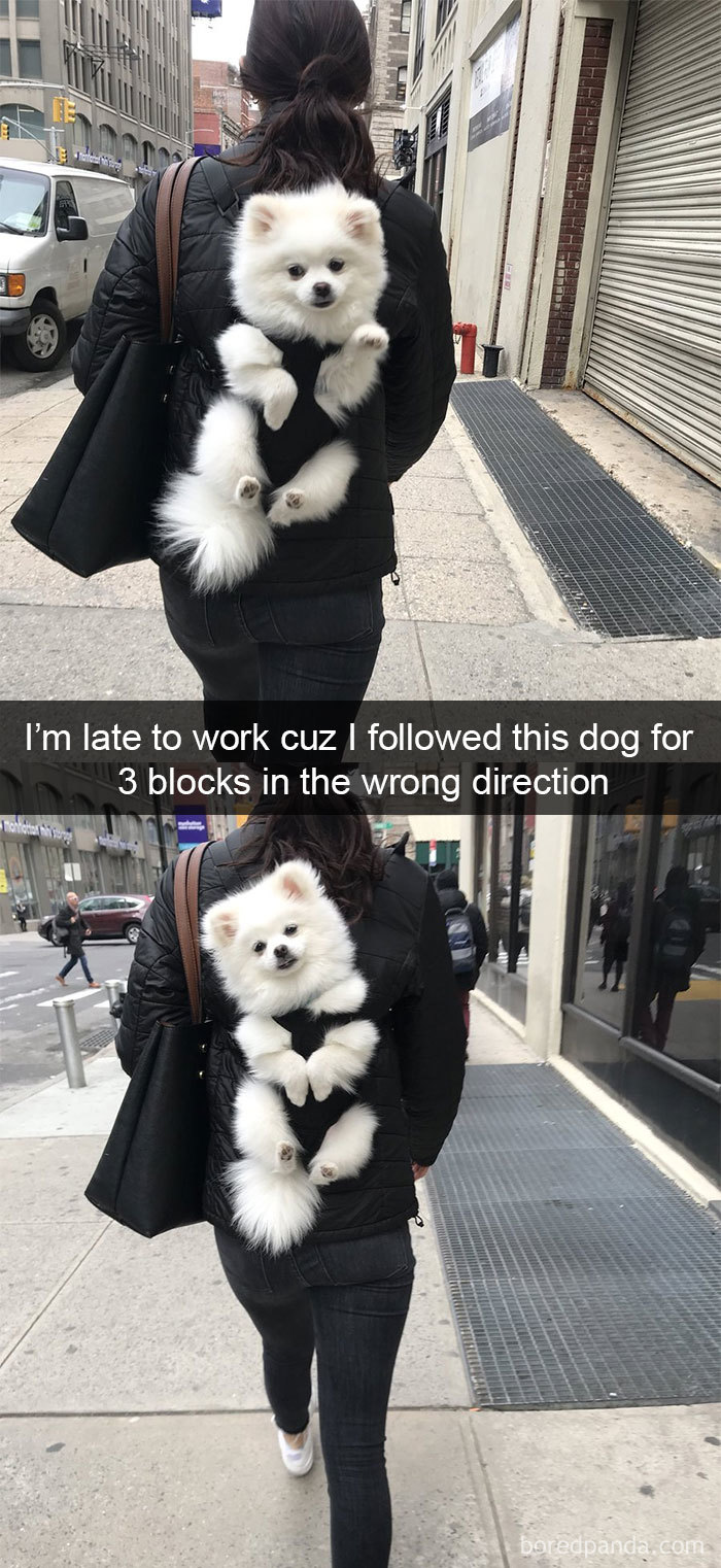 I'm Late To Work Cuz I Followed This Dog For 3 Blocks In The Wrong Direction