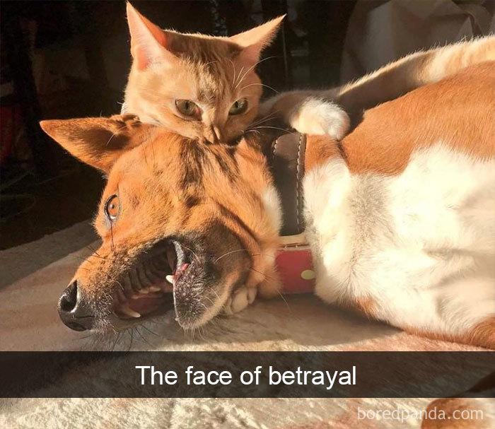 The Face Of Betrayal