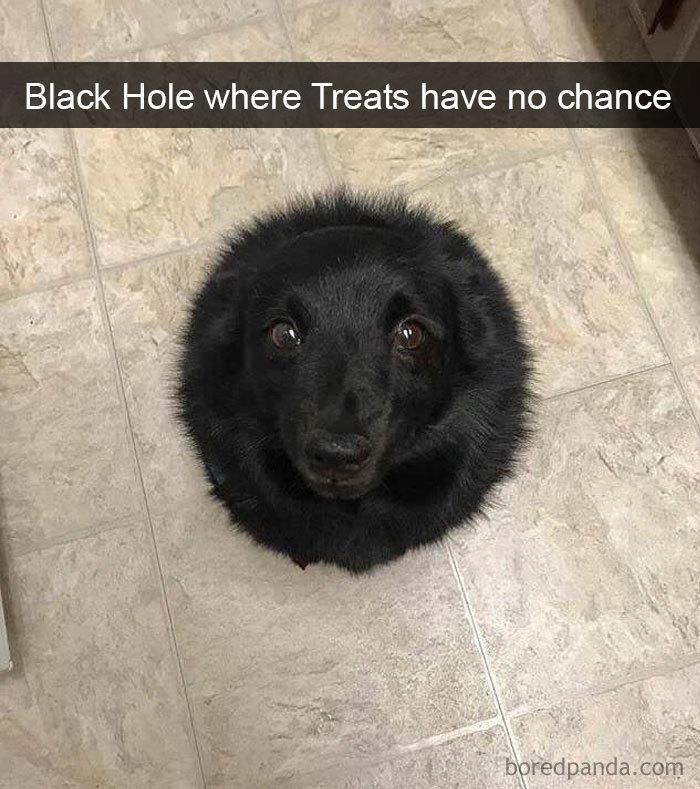 Black Hole Where Treats Have No Chance