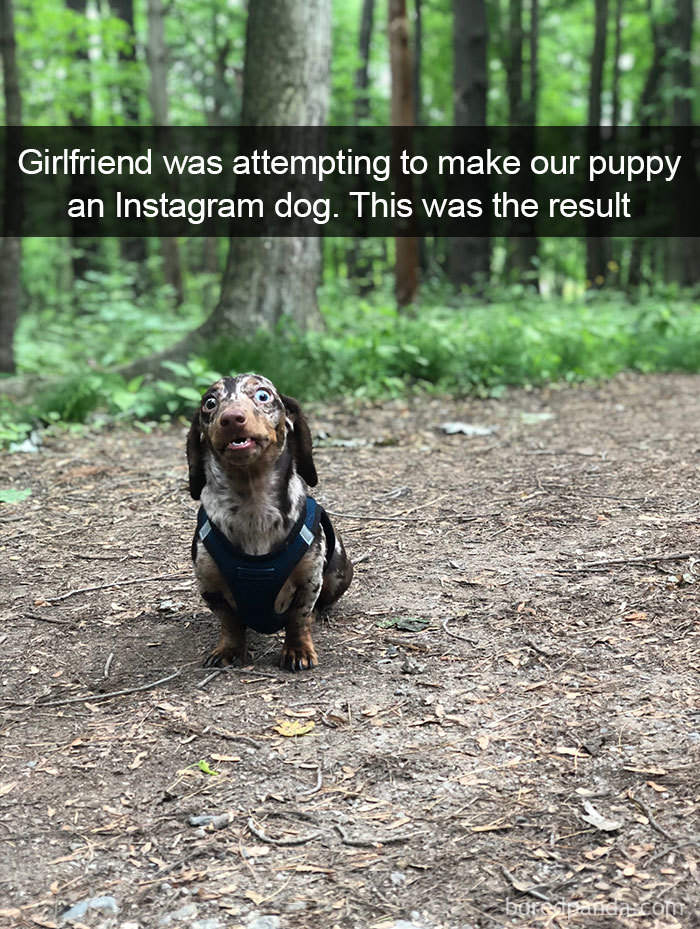 Girlfriend Was Attempting To Make Our Puppy An Instagram Dog. This Was The Result