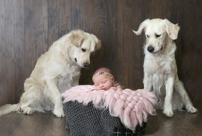 Chloe dan anjingnya