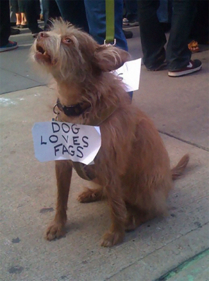Dogs Loves Fags