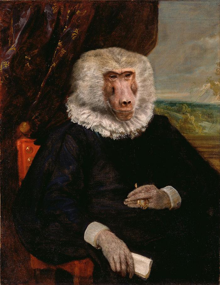 Senor Baboon