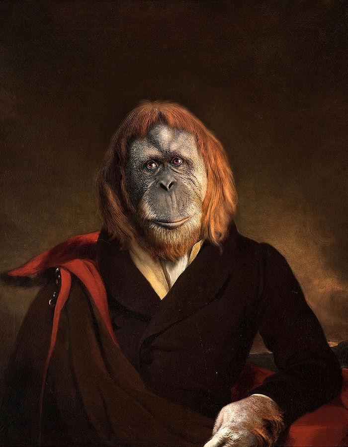 Marquess Orangutan