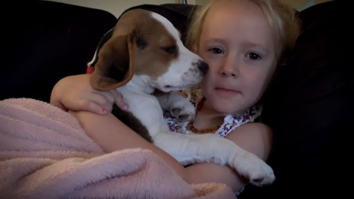 Cute Puppy Loves To Sleep On Little Girl So Much