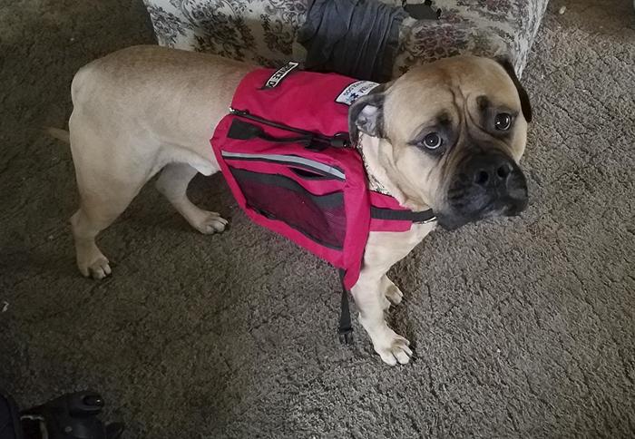 service-dog-psa-lumpatronic-15
