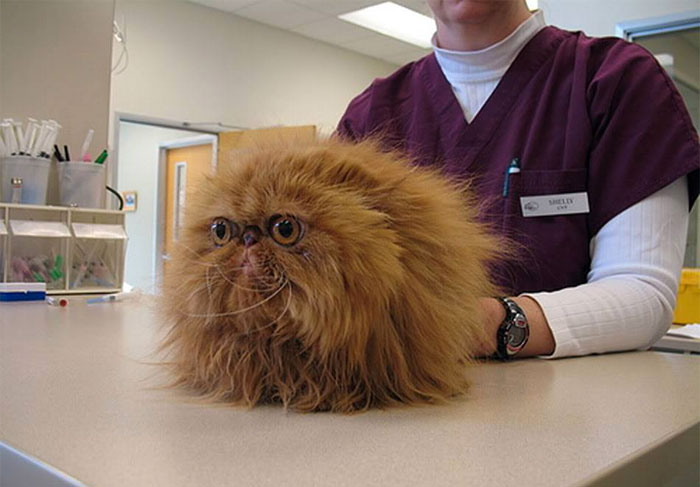 Vet Reveals The Craziest Things Pet Owners Have Done, And It's Hard To Believe They Have Actually Happened