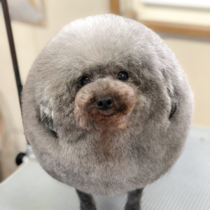 Japanese Dog Groomer Gives The Most Adorable Makeovers To Puppies