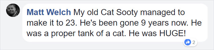 Owner Got A Cat In 1988, Probably Did Not Expect To Throw Him A Birthday Party 30 Years Later