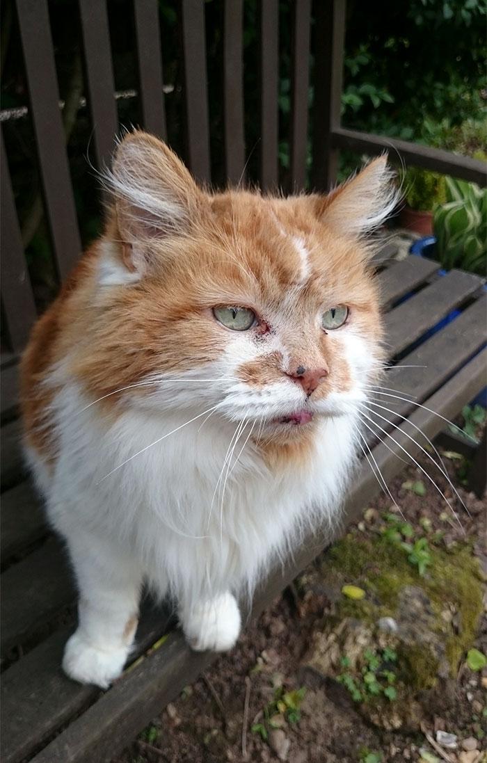 Este gato lleva viviendo con su dueña desde 1988, y puede que sea el gato más viejo del mundo