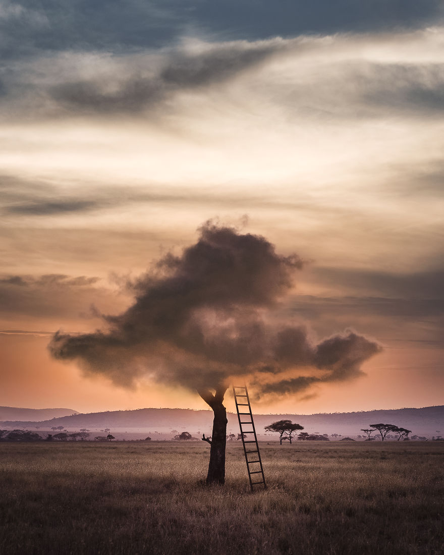 Cloud Tree Ii