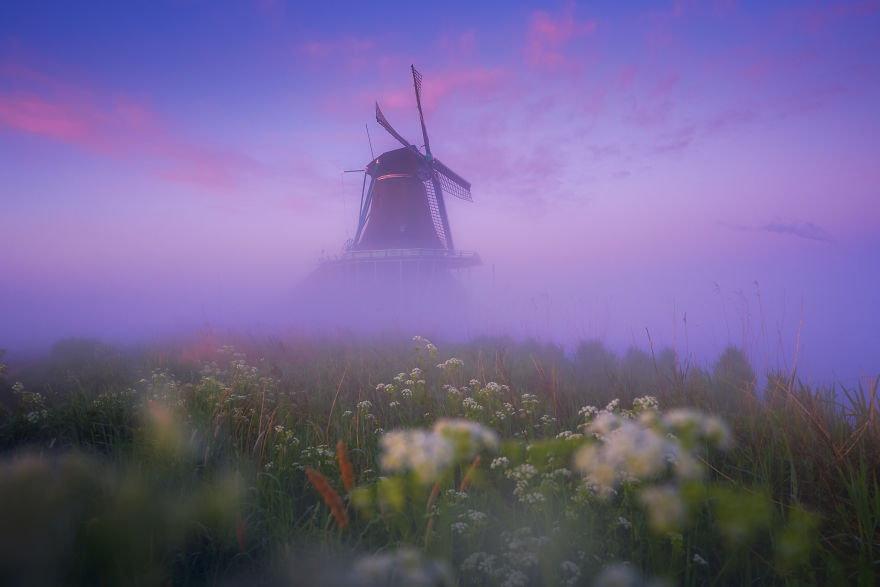 Just Before Sunrise The Clouds Turn Purple. A Thick Fog Blanket Makes It Look Like The Windmills Are Floating