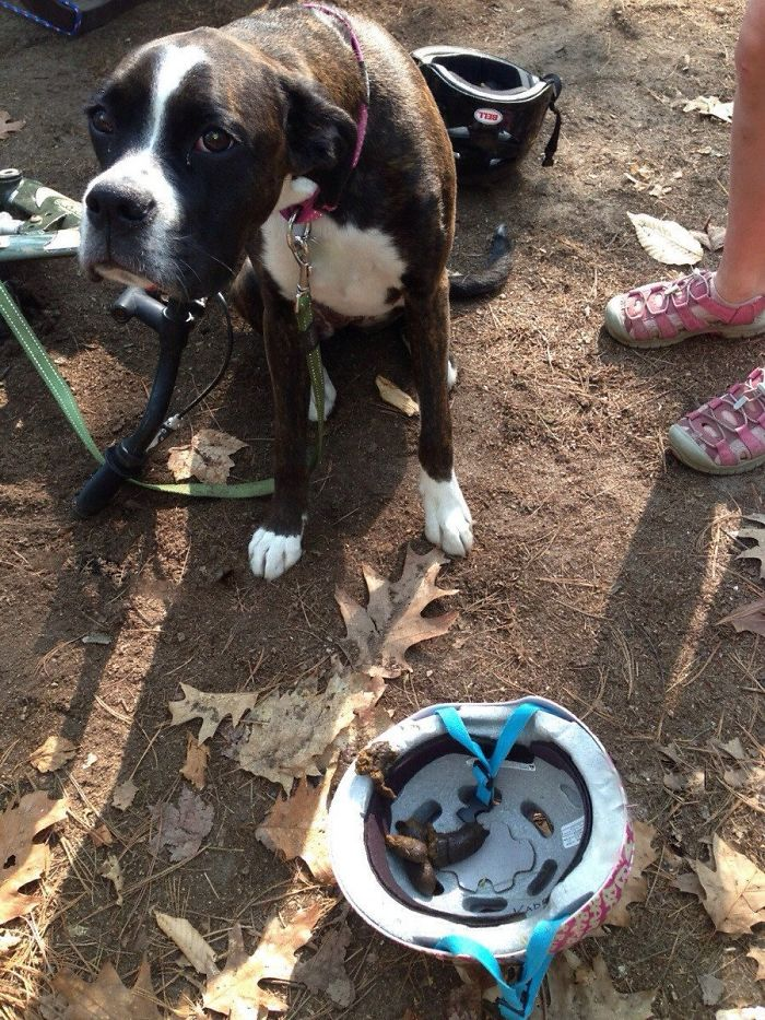 My Moms Friend Went Camping A While Ago. This Is What Their Dog Did