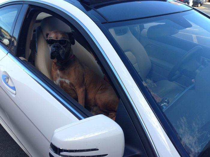 Cvs Parking Lot. Hip-Hop Blaring. No Driver In Sight
