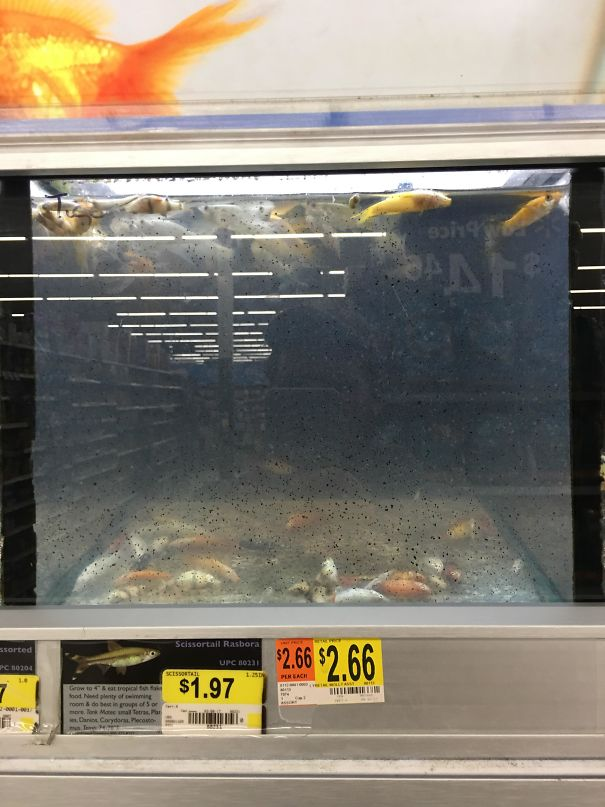 Walmart Should Stop Selling Fish