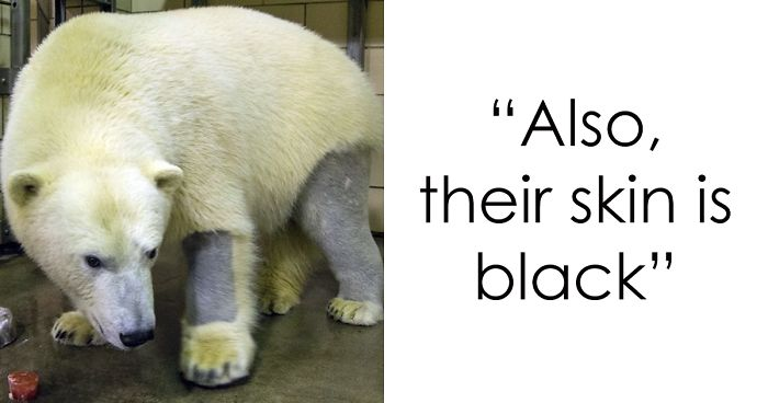 Most Interesting Facts >> Zoo Employee Reveals 16 Most Interesting Animal Facts She