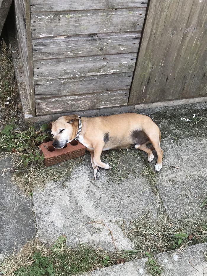 Tiene 3 camas, pero se duerme sobre un ladrillo