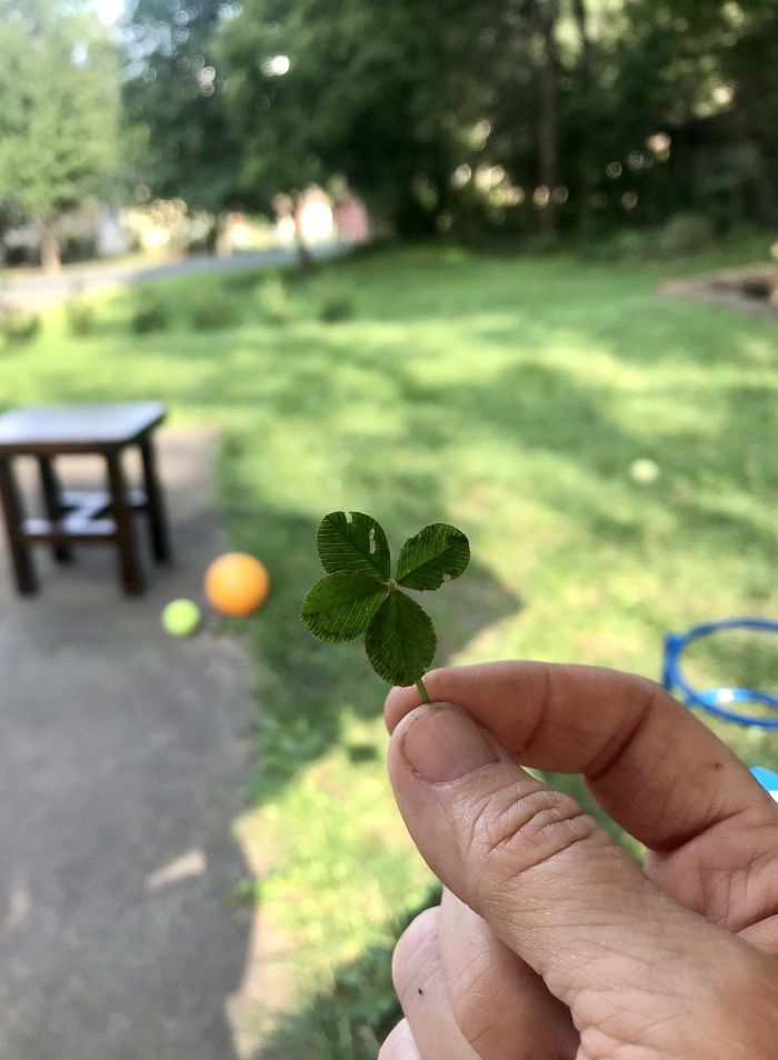 "When I Was 6 Years Old, My Dad Told Me He Would Give Me Five Dollars If I Found A Four Leaf Clover. I Spent Countless Hours Looking For One In My Yard. Today I Was Watering My New Trees And Saw This. My Dad Is No Longer With Us But I Yelled At The Top Of My Lungs: ""Dad, You Owe Me $5!"