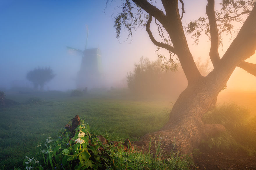 Beautiful Old Trees Combined With The Windmills And A Foggy Atmosphere Make For A Magical Moment