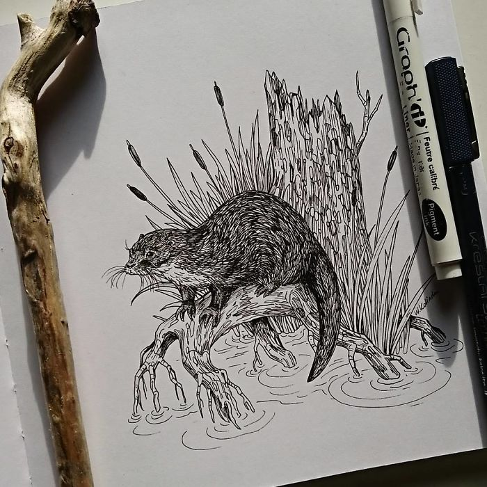 I Create Intricate And Detailed Drawings Of Animals Embedded With Their Natural Habitats