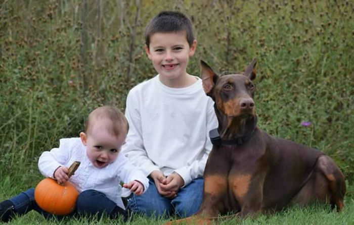 Boy Sells His Toys To Pay For His Service Dog's Treatment