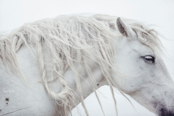 Capturing Wild Horses Made Me Realize How Fragile Freedom Is