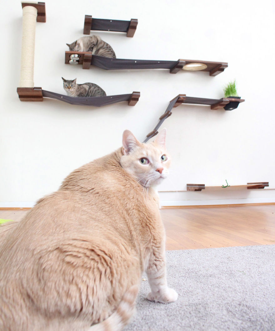 We Fell In Love With This 33 -Pound Cat, So We Decided To Adopt Him And Start His Weight Loss Journey