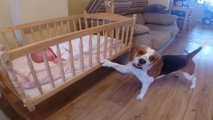 Dog Rocking Baby To Sleep