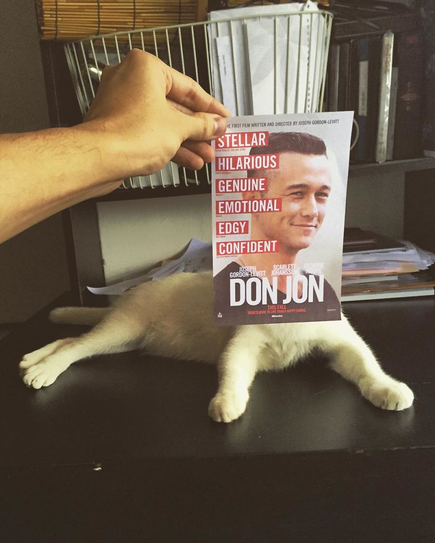 "Photographer Follows Cats Around To ""Insert"" Them Behind Famous Movie Posters"
