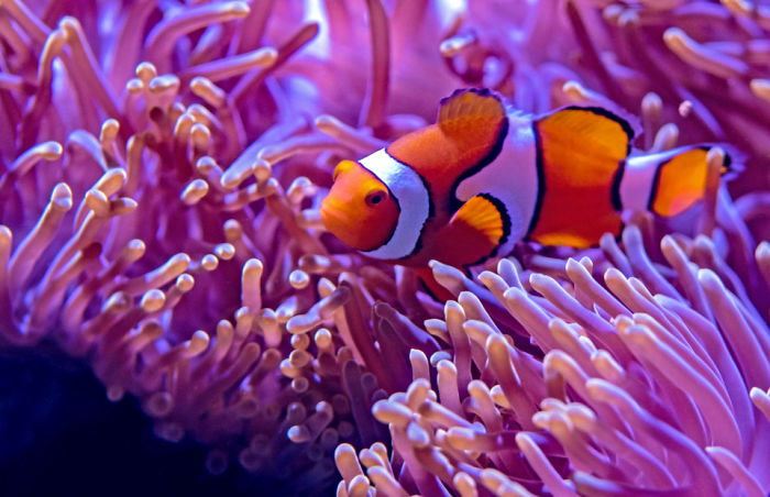 8 Must-See Sea Creatures While Diving/Snorkelling