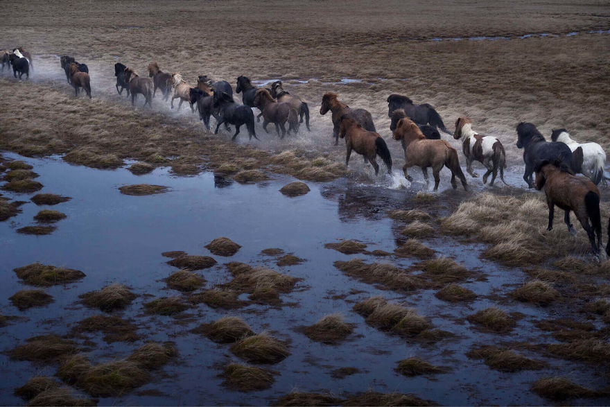 animal-photography-icelandic-horses-in-the-realm-of-legends-drew-doggett-5-5b5afbd66a094__880.jpg