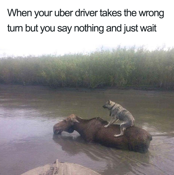Animals-Using-Uber-Memes
