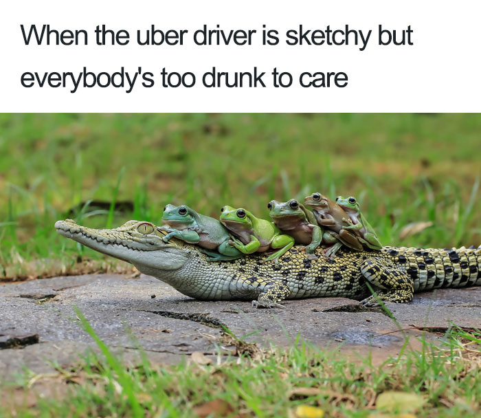Animals Using Uber
