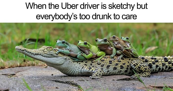 15+ Hilarious Uber Animal Memes