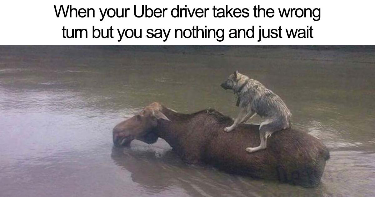 20 Hilarious Uber Animal Memes Bored Panda