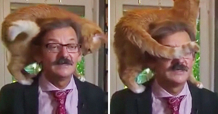 The Way This Polish Academic 'Reacts' When Cat Interrupts His Serious Interview Amuses The Internet